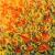 Flowerbed, 100x100