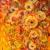 Sunny flowers, 50x50